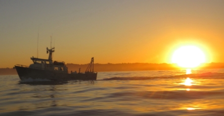 OSU's R/V Alakhah and RIB arriving just after sunrise to support the WET-NZ removal operation.